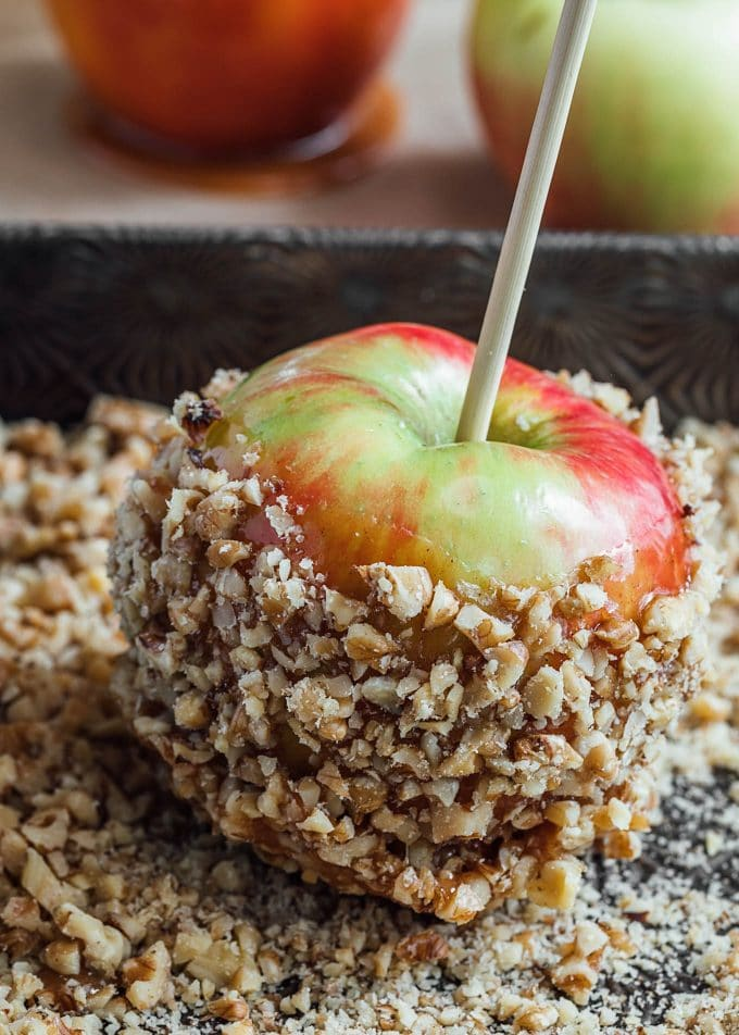 honeycrisp apple dipped in caramel and rolled in toasted chopped walnuts