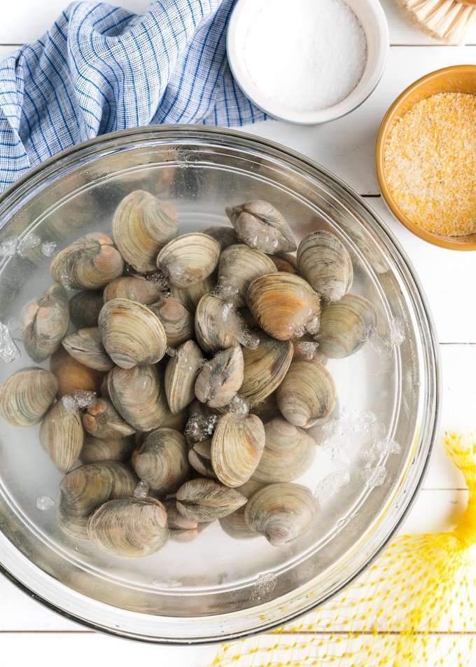 littleneck clams in a bowl of salt water