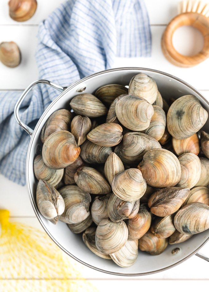 littleneck clams in a white colander with a scrub brush
