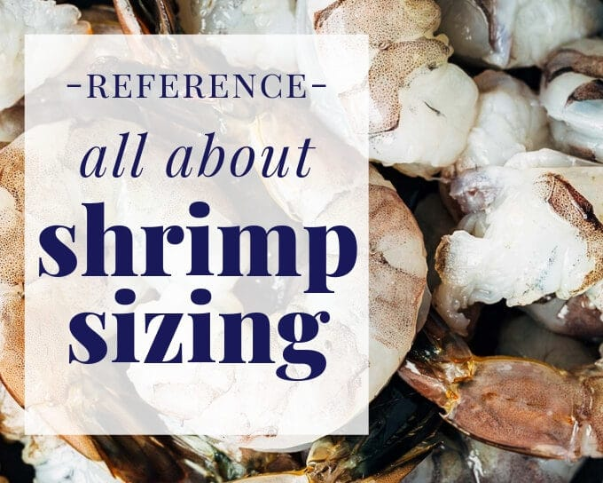 shrimp sizes guide